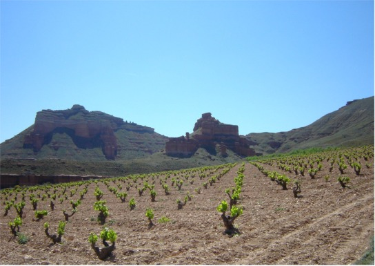 TresOjos vineyard