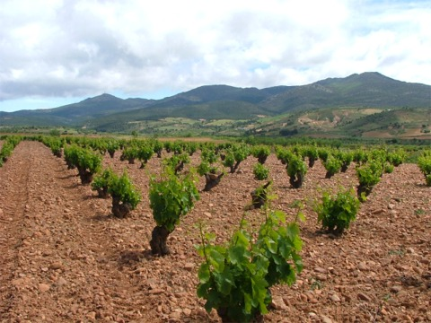 Tresojos vineyard1