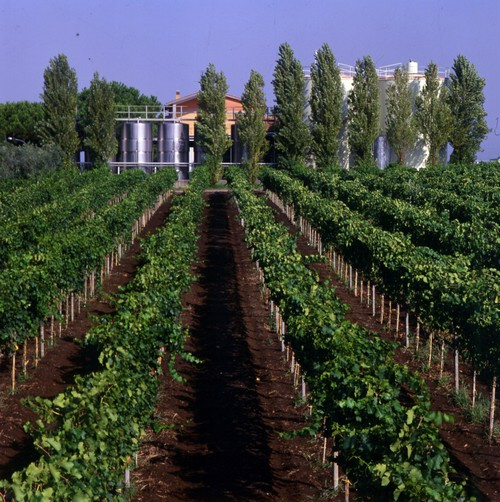 Villafranca Vineyards