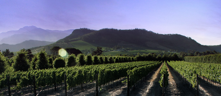 colmant vineyard pano