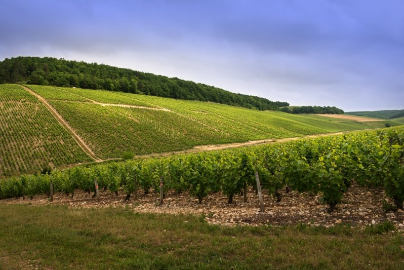perchaud vineyards 02