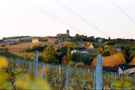 Croix Vineyard