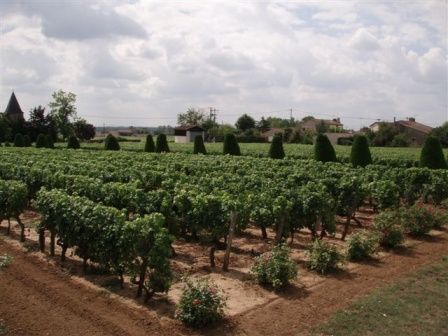 gravas vineyard1