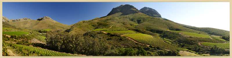 Keermont Vineyard