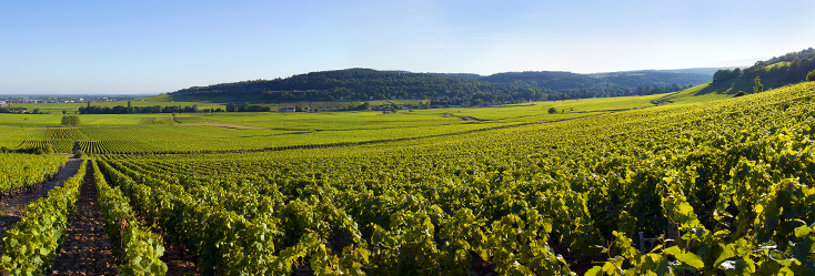 ecard vineyards savigny