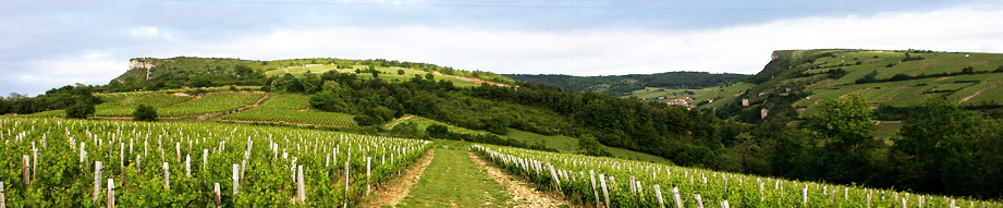 maurice martin vineyards