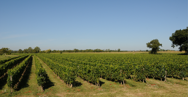 plaisance vineyards