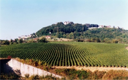 reverdy vineyard