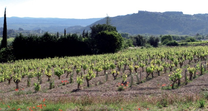 Roche Redonne Vineyards