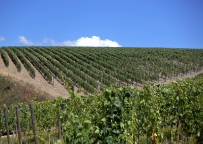 Vitanza Vineyard