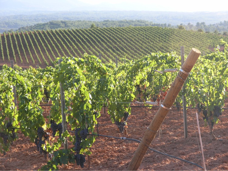 Sainte Victoire Vineyards