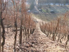 Wolfberger Steep Vineyard
